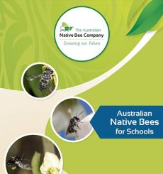 Australian Native Bees for Schools